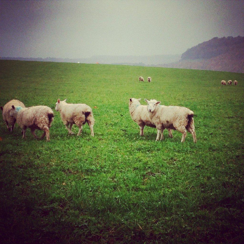 Ox Pasture Hotel North Yorkshire